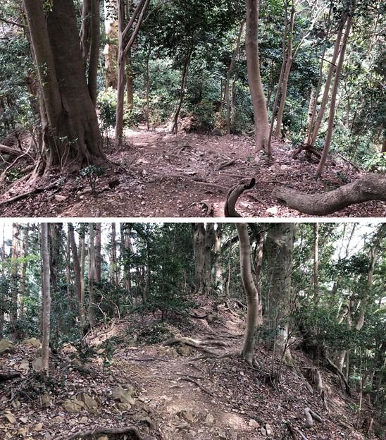 Photos: 富士見台経路(八王子市)八王子城縄張西端