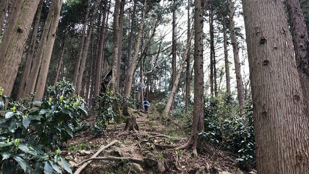 富士見台経路(八王子市)