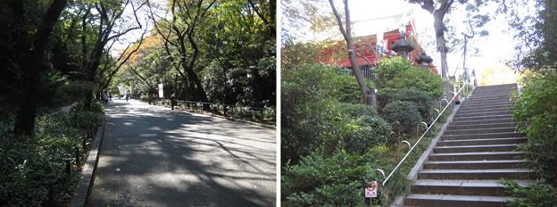 10.11.11.上野恩賜公園(台東区)清水坂