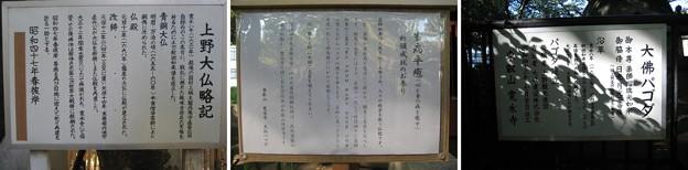 10.11.11.大佛パゴダ ・上野大仏(台東区。都営上野恩賜公園)