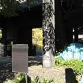 Photos: 10.11.11.寛永寺(台東区)旧本坊表門