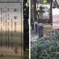 Photos: 10.11.11.寛永寺(台東区)虫塚