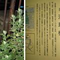 Photos: 10.10.18.浅草見附跡(台東区浅草橋)