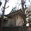 銀杏岡八幡神社(台東区浅草橋)御神木?