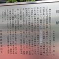Photos: 11.03.24.柳橋(台東区柳橋)