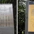 Photos: 11.03.24.鳥越神社(台東区鳥越)
