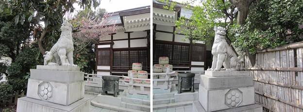 11.03.24.鳥越神社(台東区鳥越)狛犬