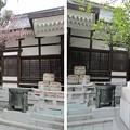 Photos: 11.03.24.鳥越神社(台東区鳥越)狛犬