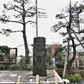 Photos: 蔵前橋 西詰南側(台東区蔵前)首尾の松
