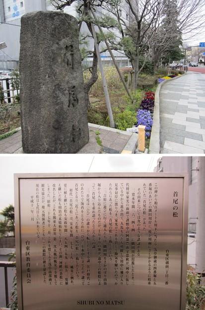 11.03.24.蔵前橋 西詰南側(台東区蔵前)首尾の松