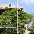 Photos: 15.05.31.西福寺(台東区蔵前)