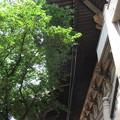 Photos: 東本願寺(台東区西浅草)