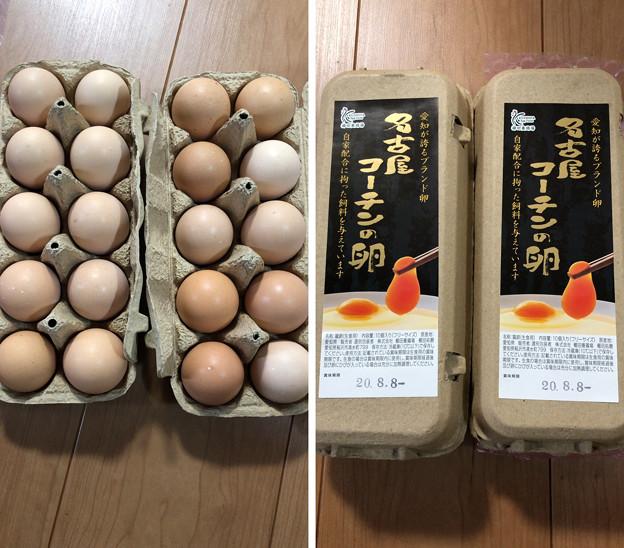 名古屋コーチンの卵へ( ̄ρ ̄へ))))) ウヘヘヘヘ 0