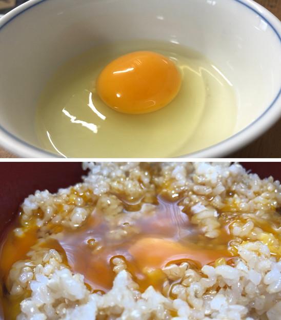名古屋コーチンの卵へ( ̄ρ ̄へ))))) ウヘヘヘヘ 2