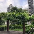 Photos: 20.08.24.時期外れの藤(―¨―;)