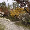 高山植物観察園(立山町)