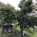 Photos: 内裏屋敷跡・月夜ノ陵(長野市鬼無里)紅葉