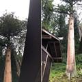 東京・加茂神社(長野市鬼無里)杉