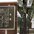 Photos: 松巌寺(長野市鬼無里)経蔵