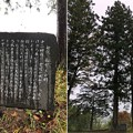 Photos: 十二神社(長野市鬼無里)伝 船繋ぎの樹