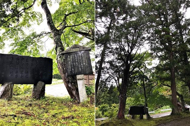 十二神社(長野市鬼無里)伝 船繋ぎの樹