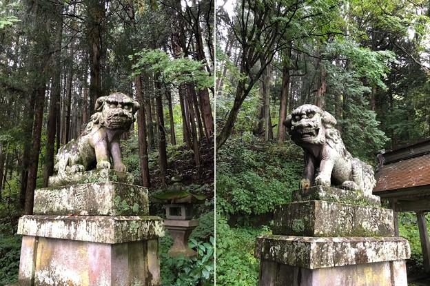 戸隠神社(長野市。宝光社)狛犬