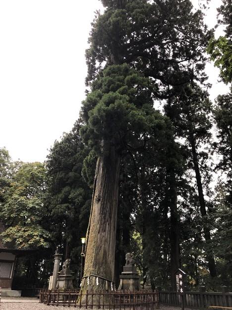 戸隠神社(長野市。中社)神木