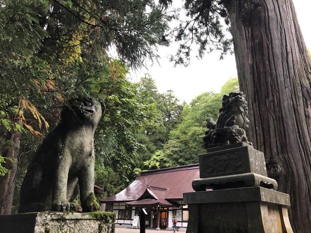 戸隠神社(長野市。中社)狛犬