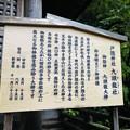 戸隠神社九頭龍社