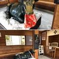 Photos: 善光寺(長野市元善町)案内所内 臥牛