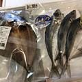 Photos: 熊野灘1――真鯵