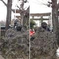 Photos: 14.02.23.牛嶋神社(墨田区向島)