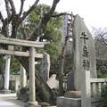 Photos: 牛嶋神社(墨田区向島)
