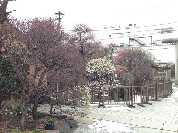 14.02.13.小村井香取神社(墨田区文花2丁目)