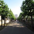12.06.14.法恩寺(墨田区太平1丁目)参道