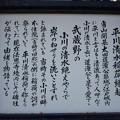 法恩寺(墨田区太平1丁目)平川清水稲荷神社