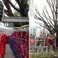 Photos: 13.02.19.千種稲荷神社(墨田区錦糸4丁目)