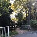 二宮神社(あきる野市)お池
