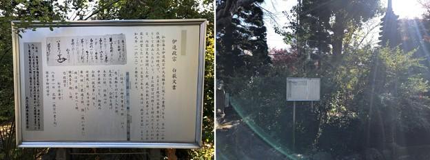大悲願寺(あきる野市)白萩と