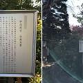 Photos: 大悲願寺(あきる野市)白萩と