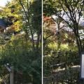 Photos: 大悲願寺(あきる野市)中門(朱雀門)