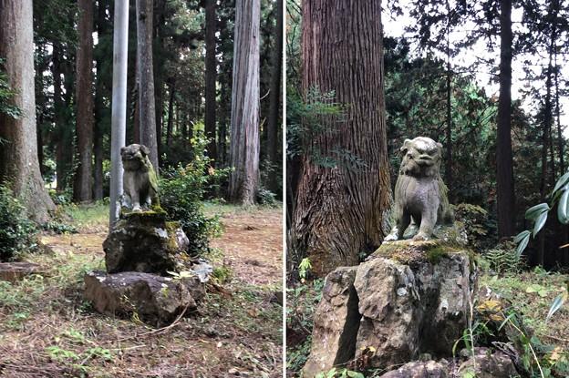 Photos: 戸倉三島神社(あきる野市)狛犬