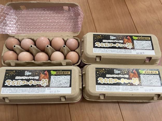 名古屋コーチン卵ふたたび……!