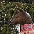 写真: コンコン雪狐