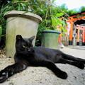Photos: ブラックパンサー