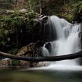 静穏の滝~倒木