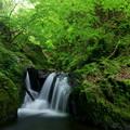 Photos: 無名瀑にとりついて