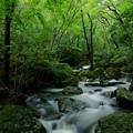 Photos: 森と流れ