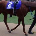 Photos: ヒットザターゲット(5回中山8日 10R 第60回グランプリ 有馬記念(GI)出走馬)