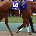 Photos: リエノテソーロ(2回東京6日 11R 第22回 NHKマイルカップ(GI)出走馬)